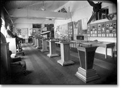Экспозиция, которую увидели первые посетители 23 февраля 1961 г.